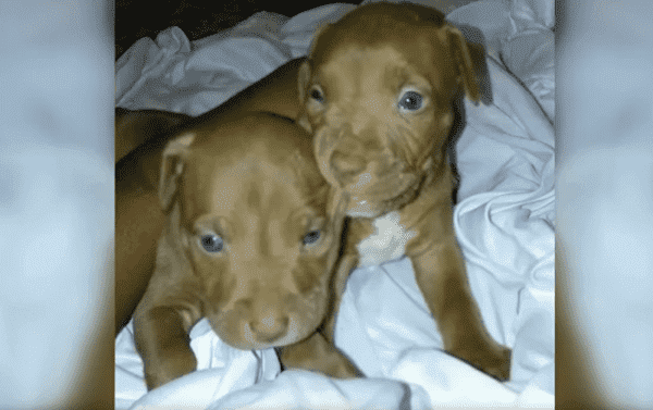 US Police Hunt 'Armed & Dangerous' Suspect After Two Puppies Stolen