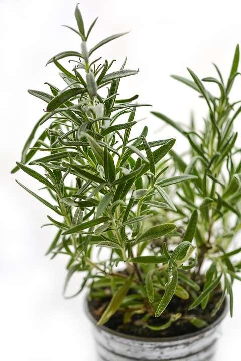 Best Plants for Indoor Herb Gardens